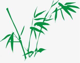 以竹子成长为主题的优秀作文
