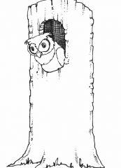 猫头鹰怎么画_卖萌的猫头鹰简笔画画法