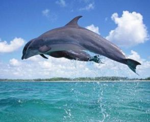 海底动物百科知识大全