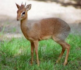 動物知識大百科_動物科普知識