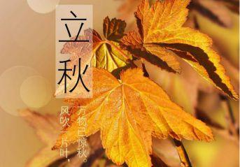 關于立秋的諺語句子