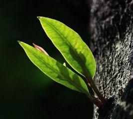 观察日记关于植物300字以上10篇
