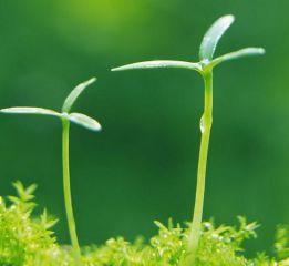 连续观察植物日记十篇