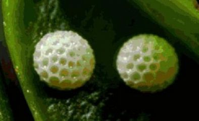 有趣的植物科普小知識