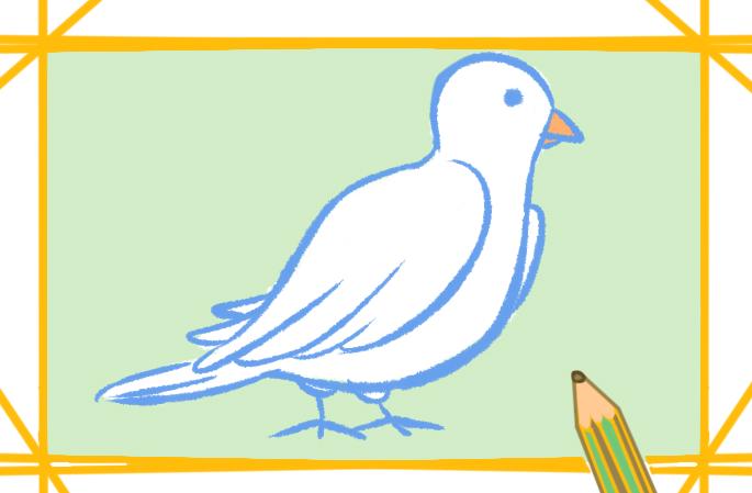 漂亮的儿童简笔画白鸽带颜色的图片