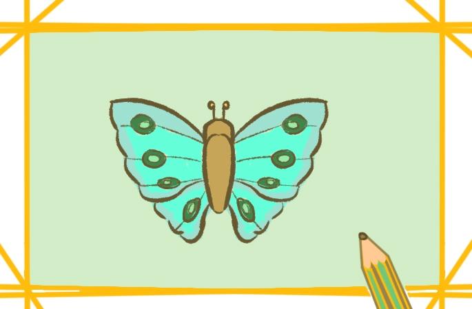 昆虫之飞蛾上色简笔画图片教程