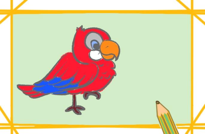 金刚鹦鹉上色简笔画要怎么画
