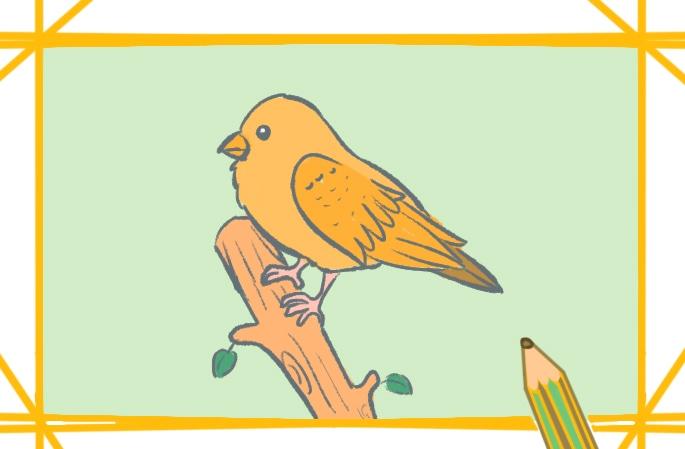 漂亮的鸟简笔画图片怎么画