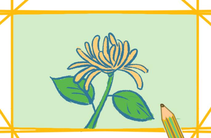 菊花简笔画图片带颜色原创教程