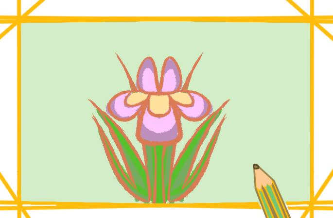 漂亮的蝴蝶蘭一步一步教你畫