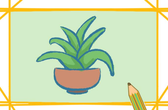 简单的芦荟上色简笔画要怎么画