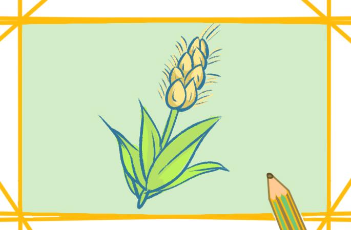 金黄色的麦子简笔画教程步骤图片大全