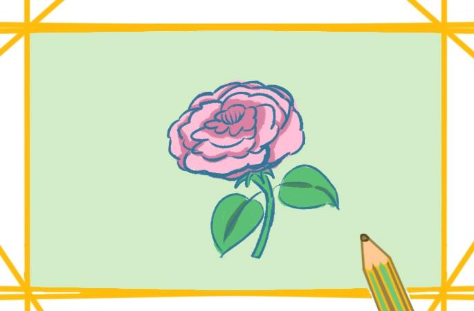 傾城牡丹上色簡筆畫要怎么畫