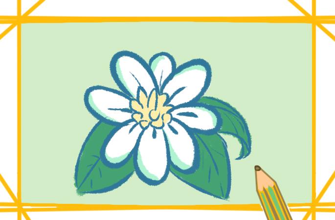 美丽的白花上色简笔画要怎么画
