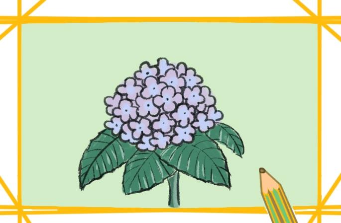 漂亮的绣球花图片怎么画
