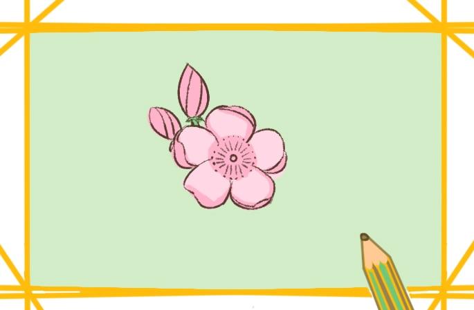 漂亮的粉色樱花简笔画图片怎么画
