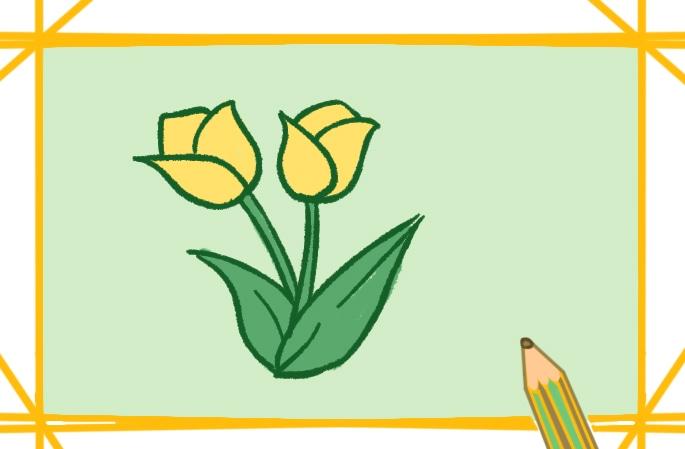 简单好看的郁金香简笔画图片怎么画
